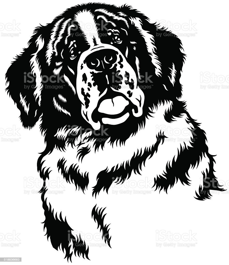 saint bernard dog head vector art illustration