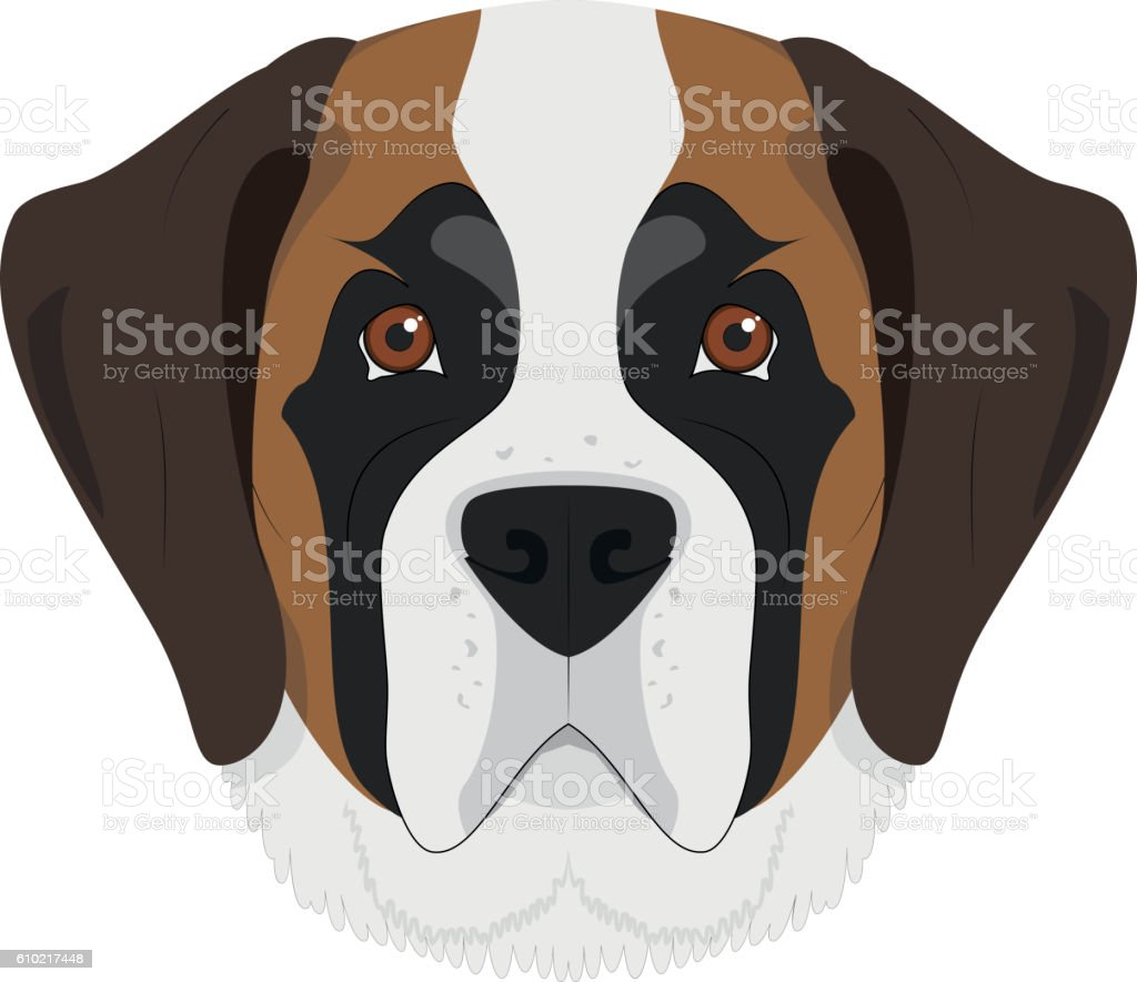 Saint Bernard dog isolated on white background vector illustrati vector art illustration