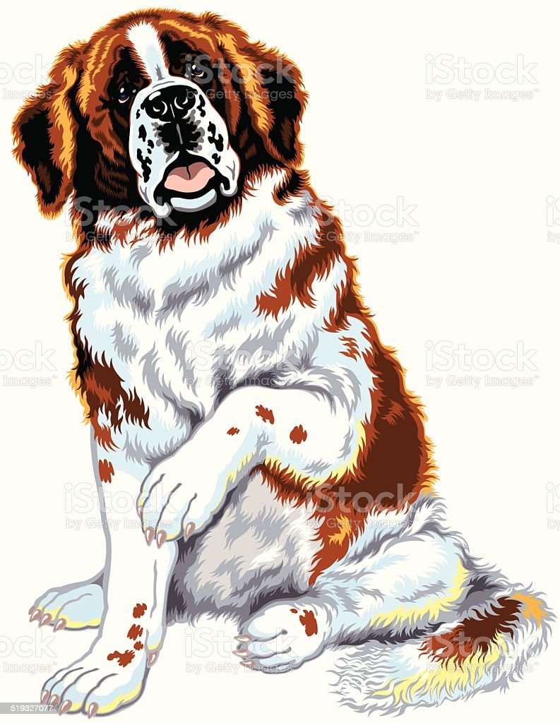 saint bernard dog vector art illustration