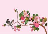 Sakura, bird.