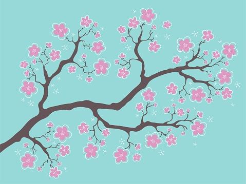 Sakura blossom on blue background. Cherry flower blossom branch, peach bloom, sakura branch. Blooming Asian nature.