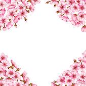 Sakura blossom vector illustration frame background.