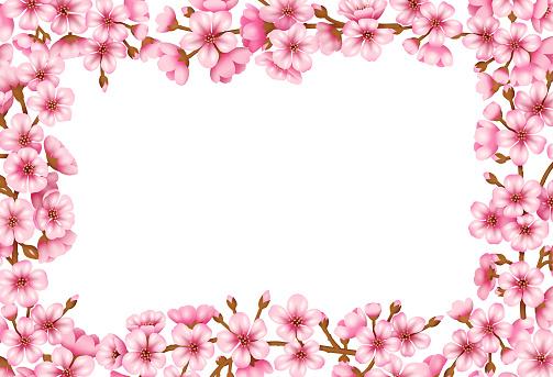 Sakura Blossom Vector Background