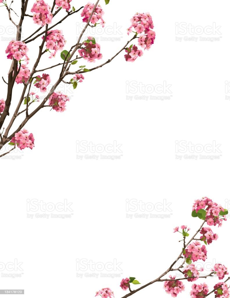 Sakura Border royalty-free stock vector art