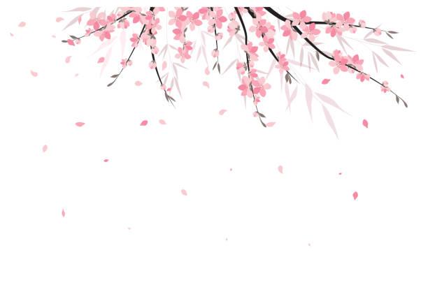 stockillustraties, clipart, cartoons en iconen met sakura tak decoratie - bloesem