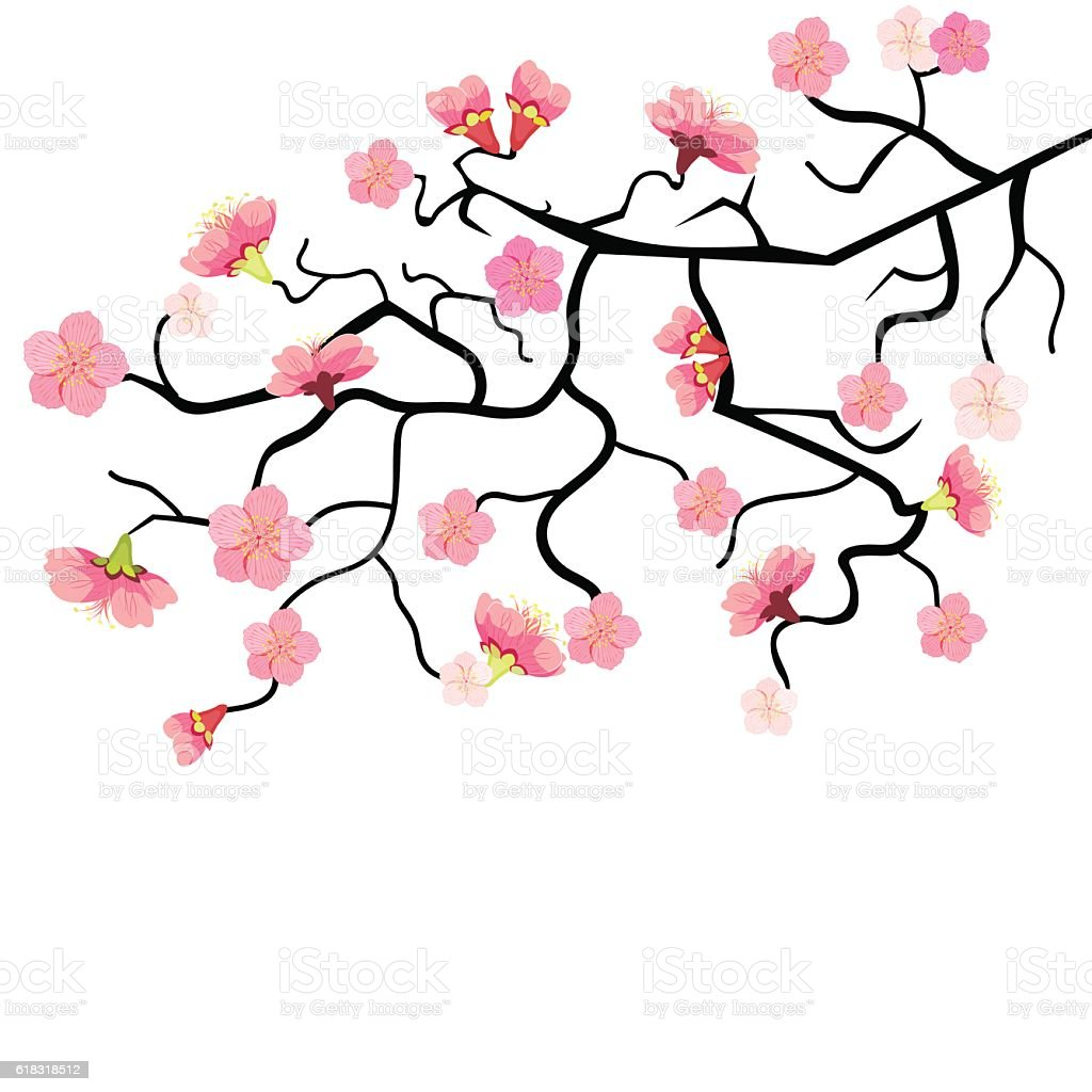 sakura branch with cherry blossom vector illustration stock vector rh istockphoto com cherry blossom vector images cherry blossom vector images