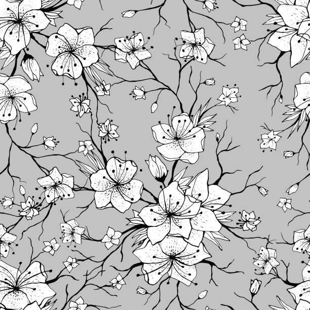 Black And White Cherry Blossom Illustrations, Royalty-Free ...