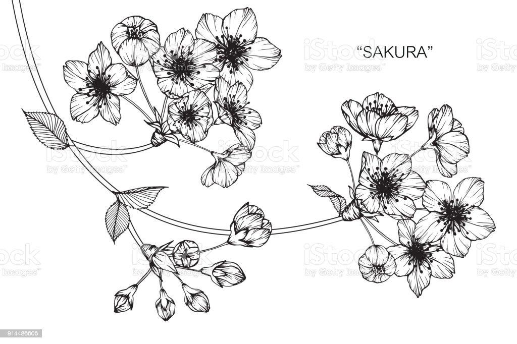 Dibujo De Flor De Cerezo Para Colorear: Sakura Dessin De Fleur De Cerisier En Fleurs