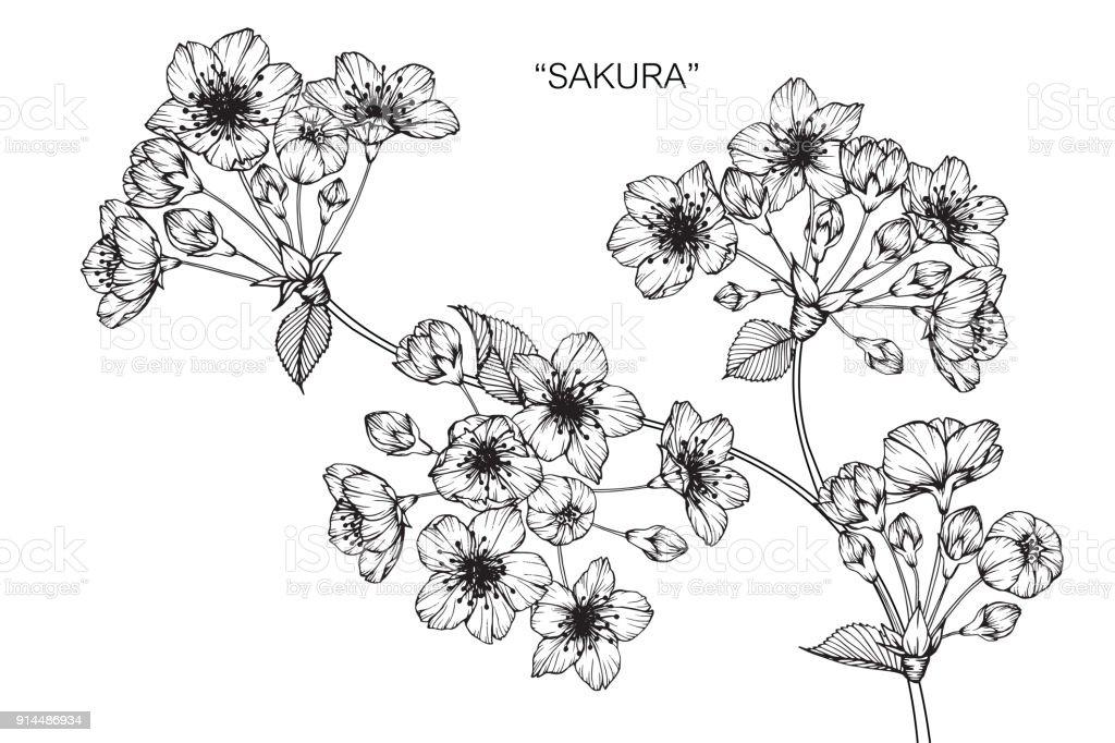 Sakura Dessin De Fleur De Cerisier En Fleurs Cliparts Vectoriels