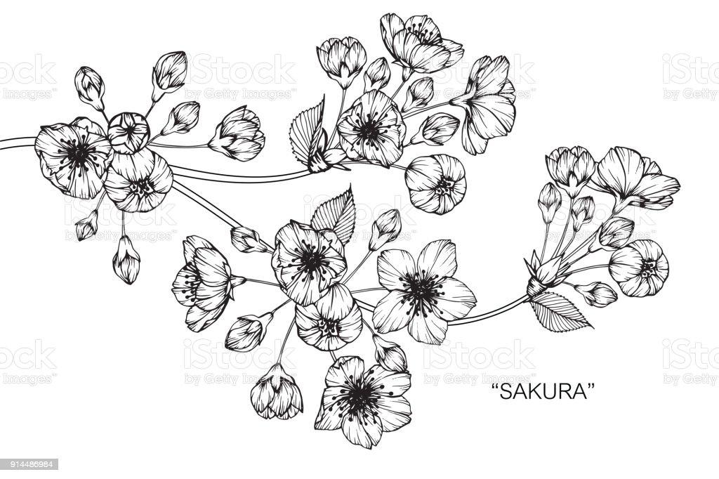 Ilustración De Sakura Dibujo De La Flor De Cerezo Y Más Banco De