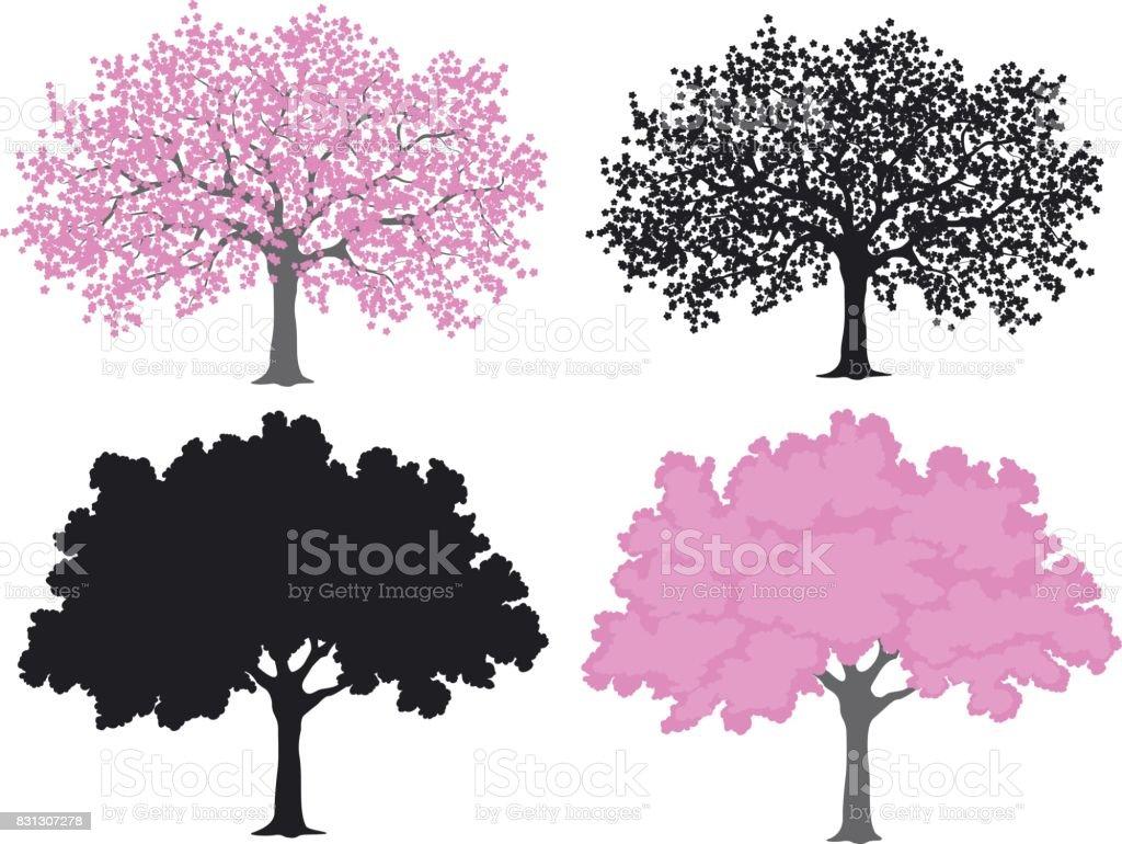 Sakura, Kirschbaum in Farbe und Silhouetten – Vektorgrafik