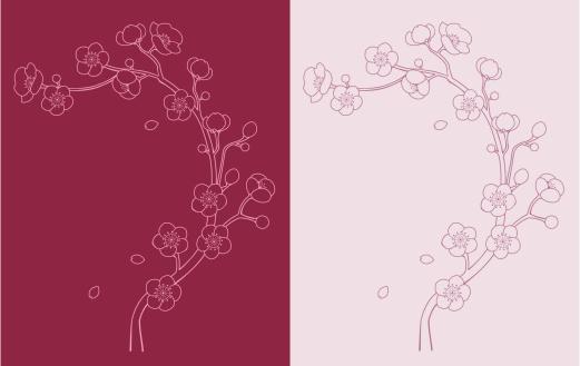 sakura / cherry blossom vine