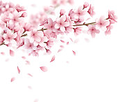 Branch with beautiful sakura flowers and falling petals realistic composition on white background vector illustration