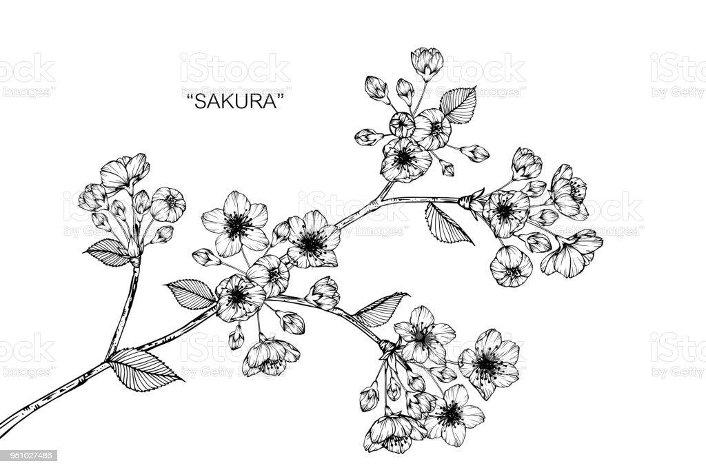 さくら花図面イラスト白い背景でライン アートと黒と白 いたずら書きの