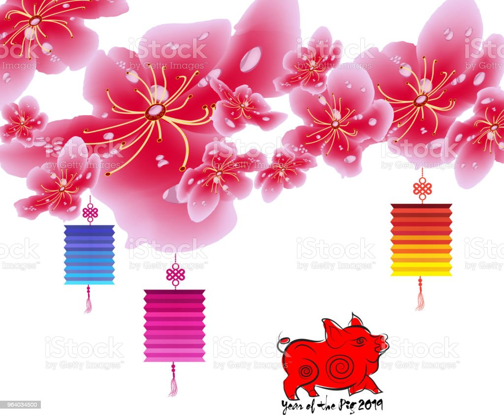 Sakura flowers background. Cherry blossom and lantern isolated white background. Chinese new year - Royalty-free 2019 stock vector