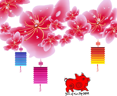 Sakura Flowers Background Cherry Blossom And Lantern Isolated White Background Chinese New Year Stock Illustration - Download Image Now