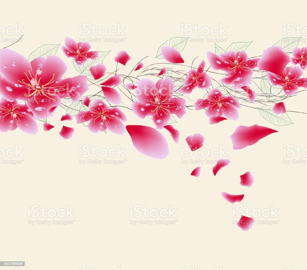 Sakura Flowers Background Cherry Blossom Isolated White Chinese New Year Royalty Free