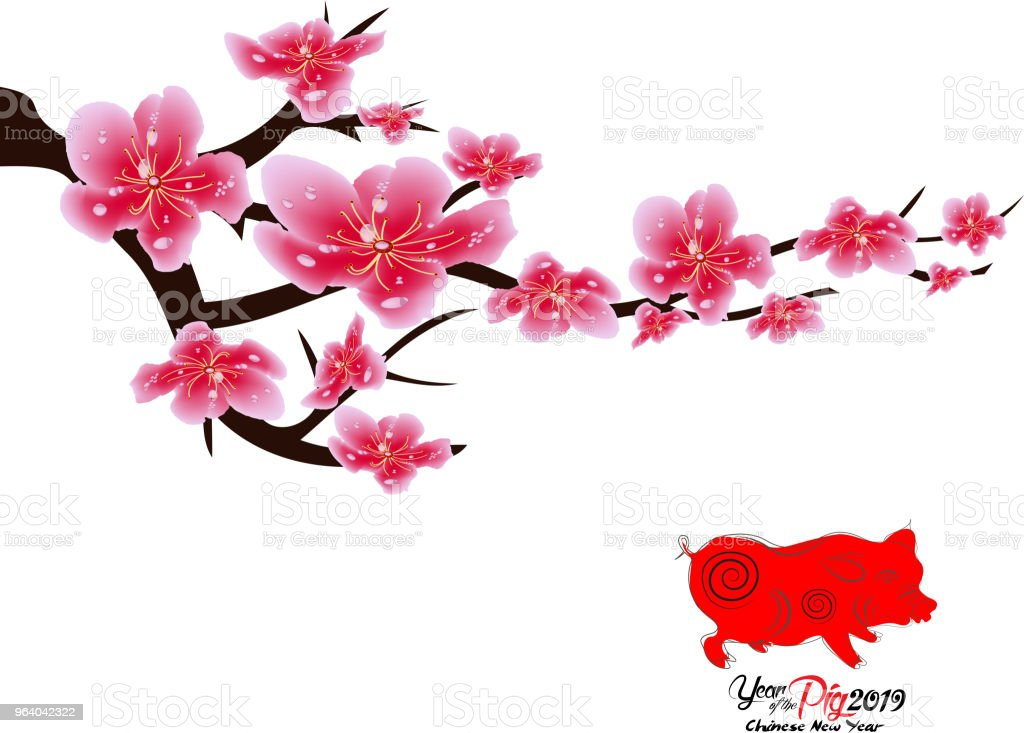 sakura flowers background cherry blossom isolated white background chinese new year royalty free