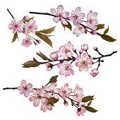 Sakura flowers background