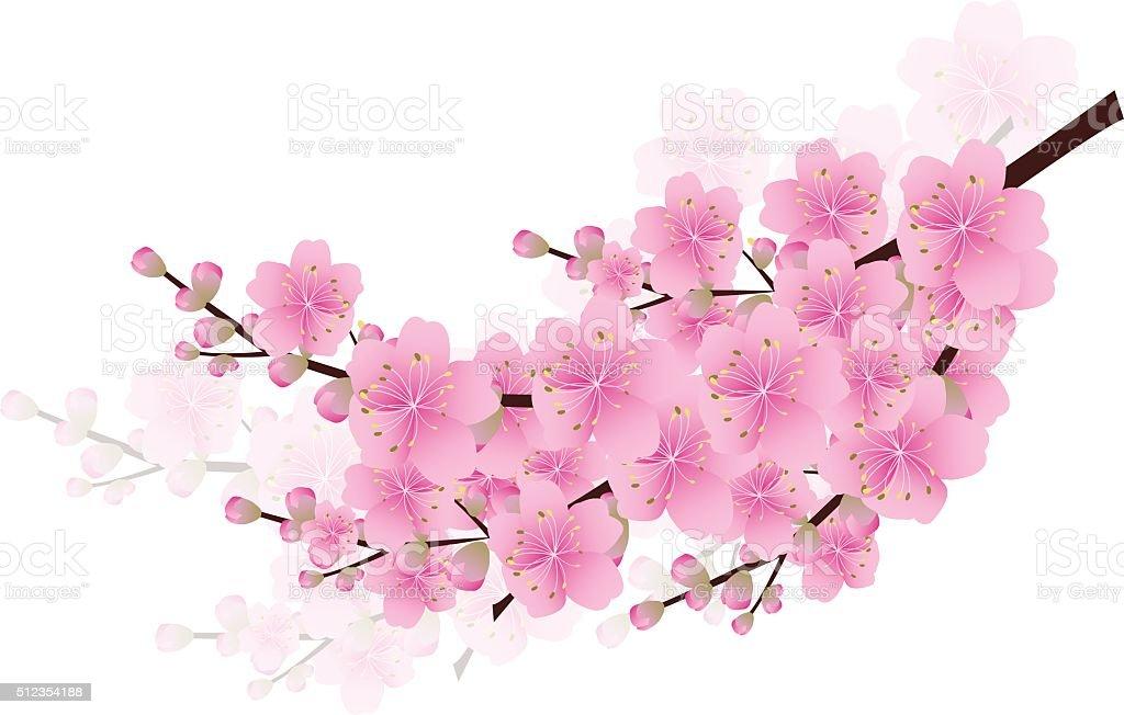 Fiori Di Ciliegio Sakura Fiori Sfondo Fiore Di Ciliegio Primavera