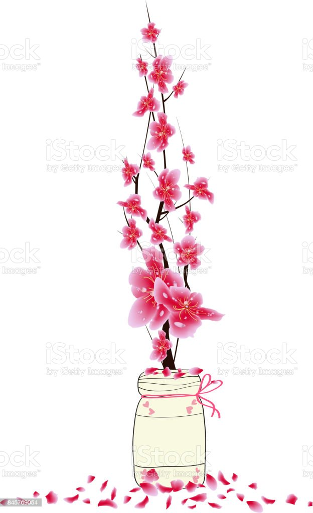 Sakura Flowers Spring With Bird Cherry Blossom Isolated