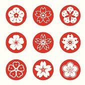 different style of sakura graphics.
