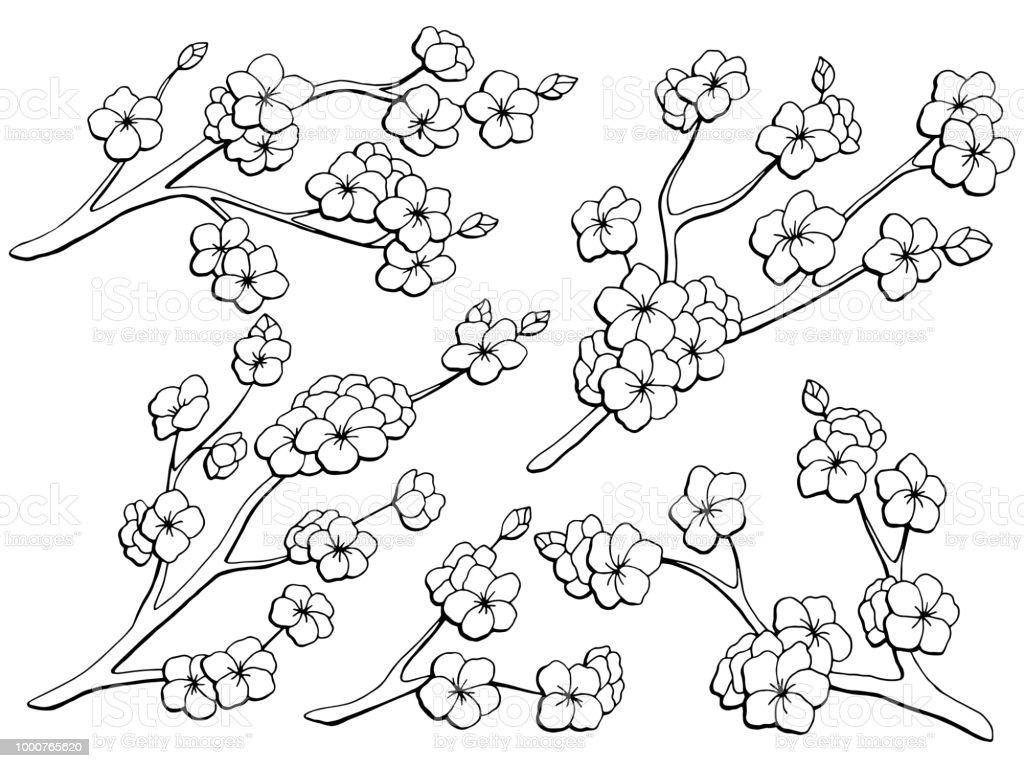 Vetores De Desenho Isolado Branco Sakura Flor Grafico Ramo Preto
