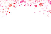 Sakura flowers on white backround. Vector.