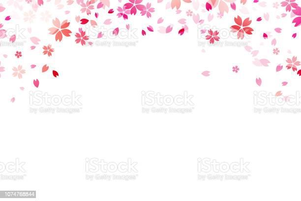 Sakura on white backround vector id1074768844?b=1&k=6&m=1074768844&s=612x612&h=mnd7oozvh 8zul6vubpqweyogp9zpccbdvneqnhbe8w=