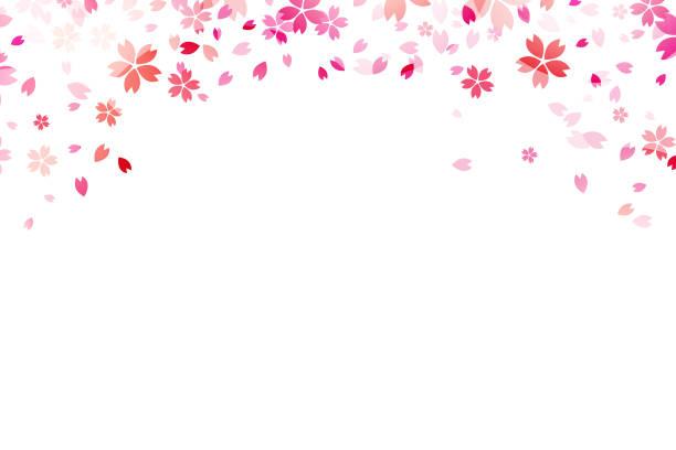 白 backround のさくら。 - 桜点のイラスト素材/クリップアート素材/マンガ素材/アイコン素材