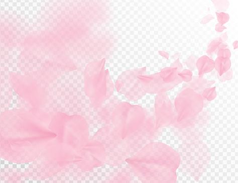 Fondo de vector vuelo de Sakura pétalos. Pétalos de rosa de onda ilustración aislada en blanco transparente. 3D romántico día de San Valentín primavera tierna claro telón de fondo. Recubrimiento de diseño del romance de ternura