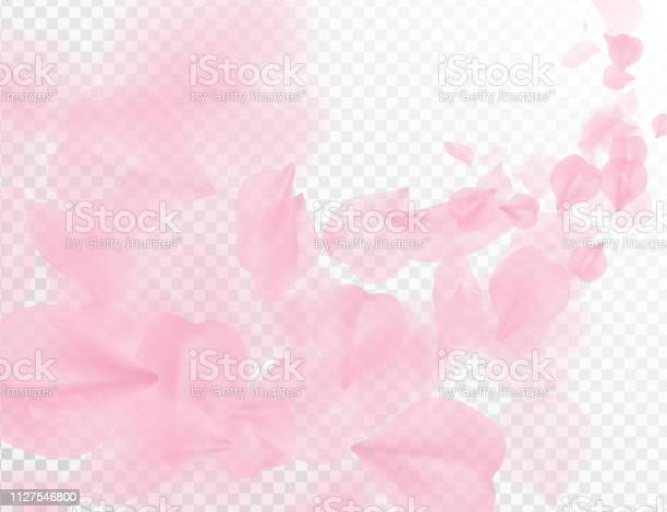 Sakura petal flying vector background pink flower petals wave on vector id1127546800?b=1&k=6&m=1127546800&s=612x612&h=nh5m8amj9nd7qo7wk6qx6vao1woe2w4ogs3aage9q4a=