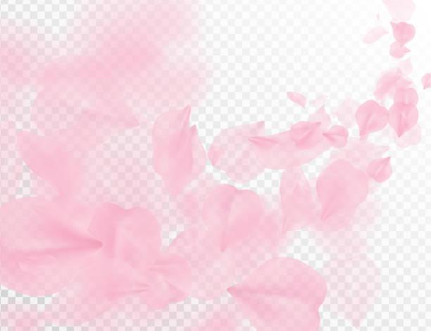 sakura płatek latający wektor tle. różowe płatki kwiatów fali ilustracji izolowane na przezroczystej bieli. 3d romantyczne walentynki dzień wiosna przetargu światło tło. nakładki czułość romans projekt - różowy stock illustrations