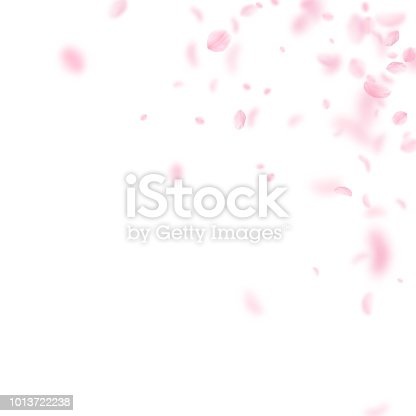 Sakura petals falling down. Romantic pink flowers corner. Flying petals on white square background. Love, romance concept. Classic wedding invitation.