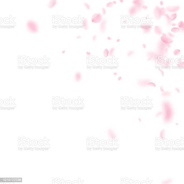 Sakura petals falling down romantic pink flowers corner flying petals vector id1013722238?b=1&k=6&m=1013722238&s=612x612&h=p6bd 36vd9ufnfwhzgs4ix3daz6emm8rwbwjyqkl5xc=