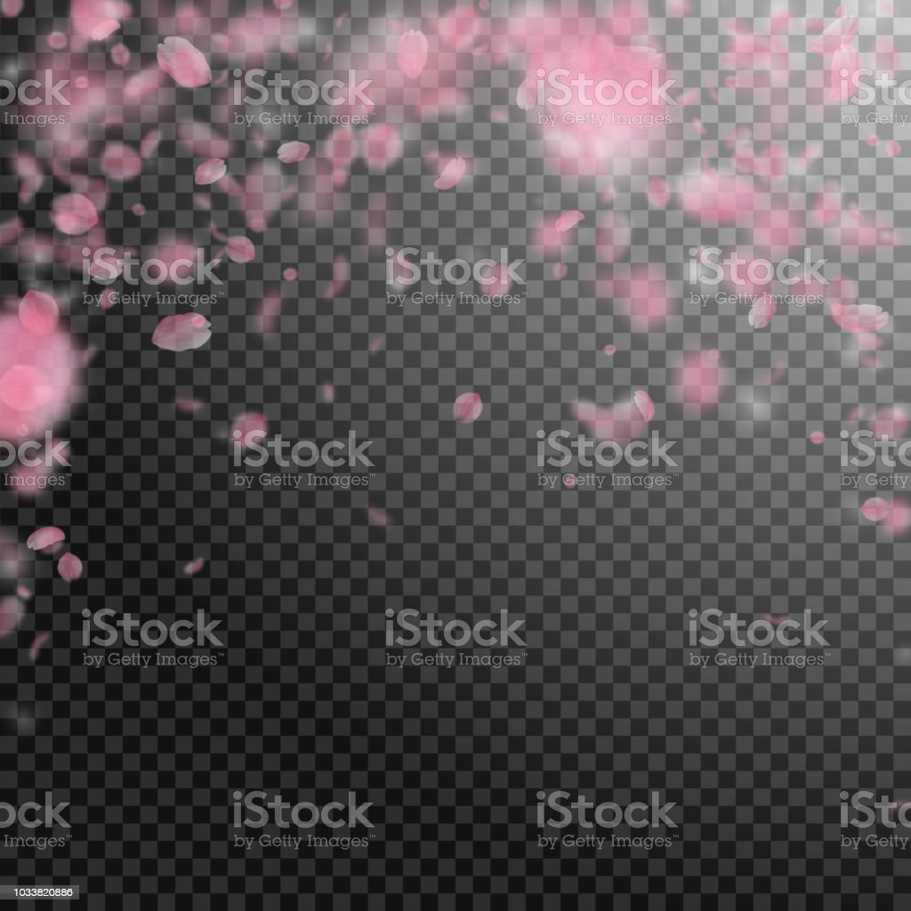 sakura petals falling down romantic pink flowers falling rain flying