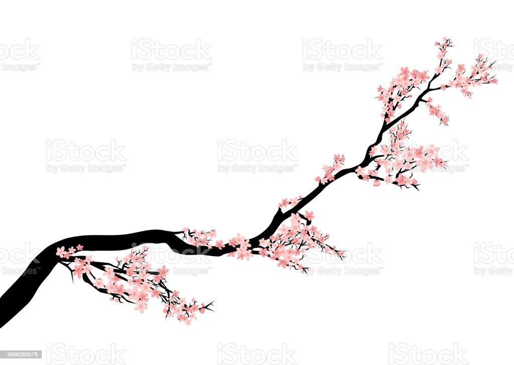 Sakura Tree Blossom Branch Vector Design Stock Vector Art More