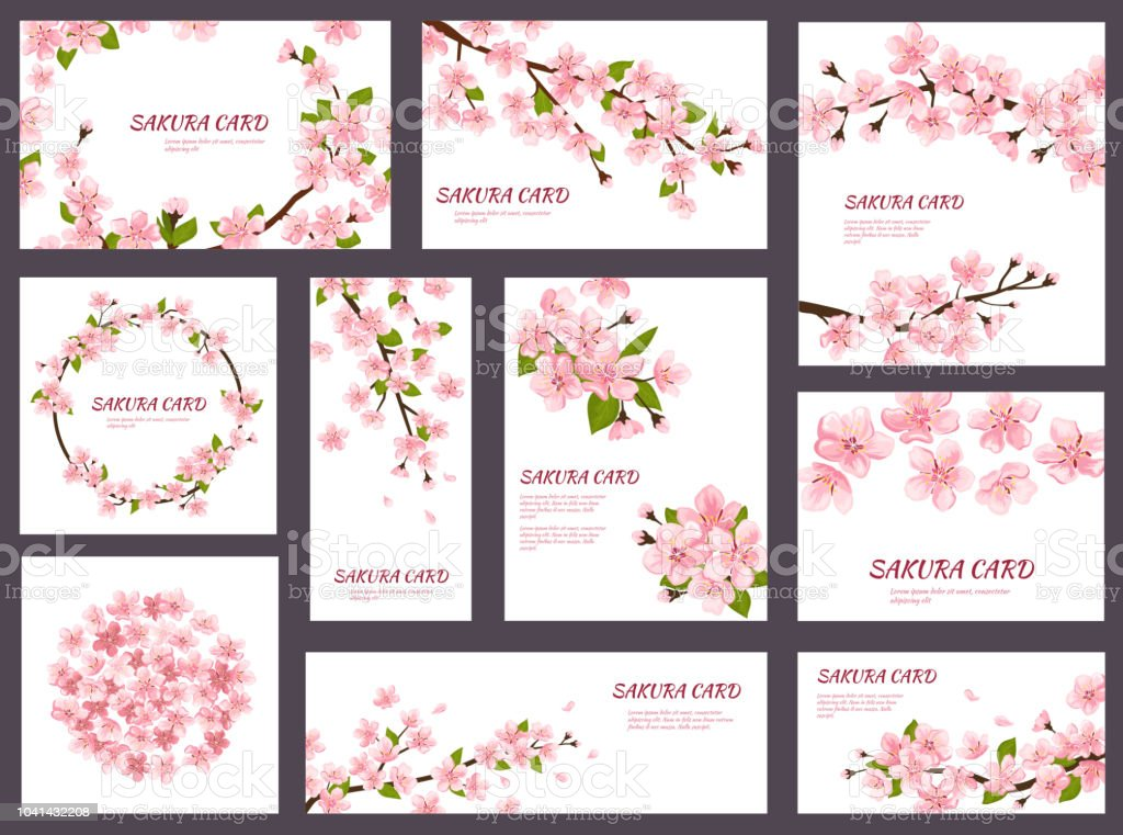 Sakura Vector Blossom Cherry Greeting Cards With Spring Pink Blooming Flowers Illustration Japanese Set Of Wedding