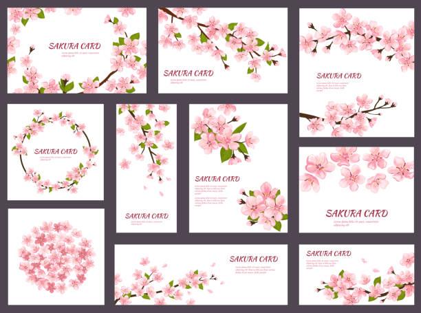 sakura vektor cherry blossom grußkarten mit feder rosa blühenden blumen abbildung japanisches set hochzeit einladung blüte vorlage dekoration isoliert auf weißem hintergrund - kirschblüte stock-grafiken, -clipart, -cartoons und -symbole