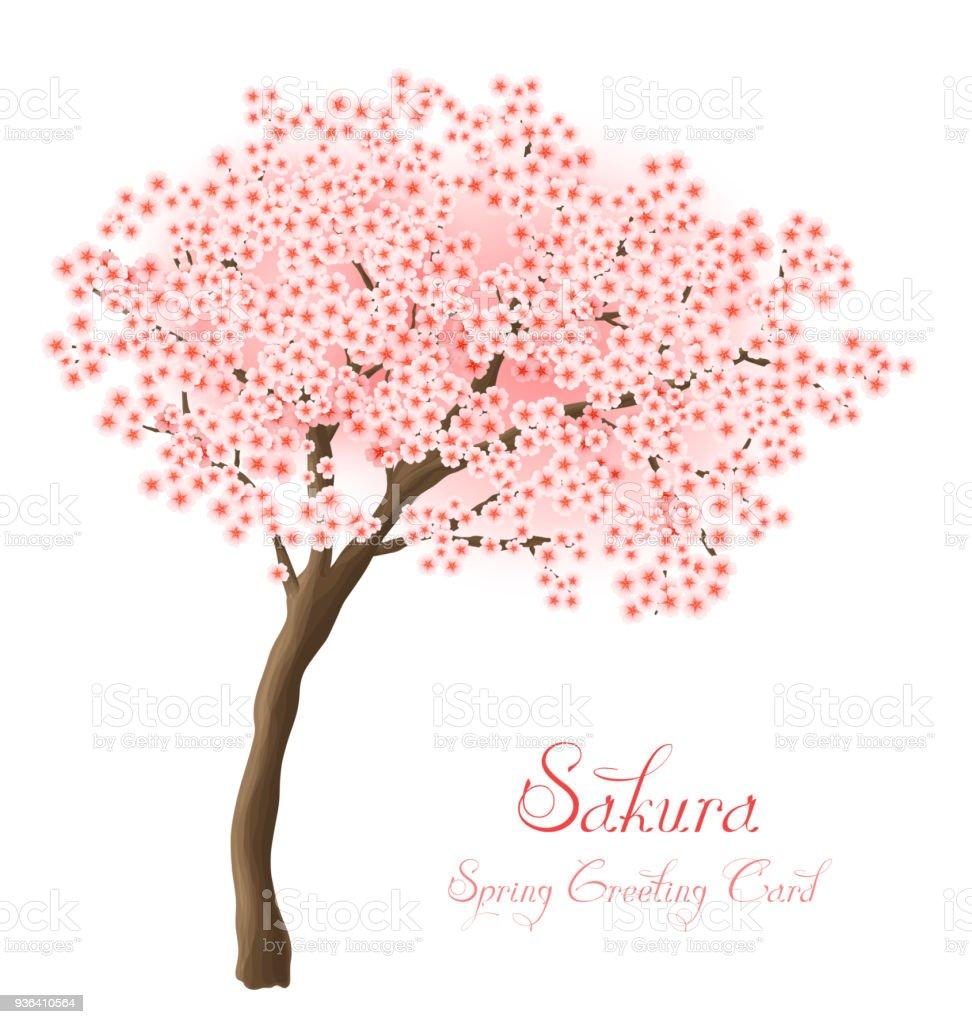Illustration Vectorielle De Sakura Carte De Voeux Fleur Cerisier