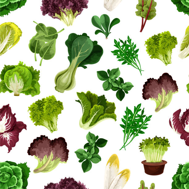 salad greens and leafy vegetables pattern - lettuce stock illustrations