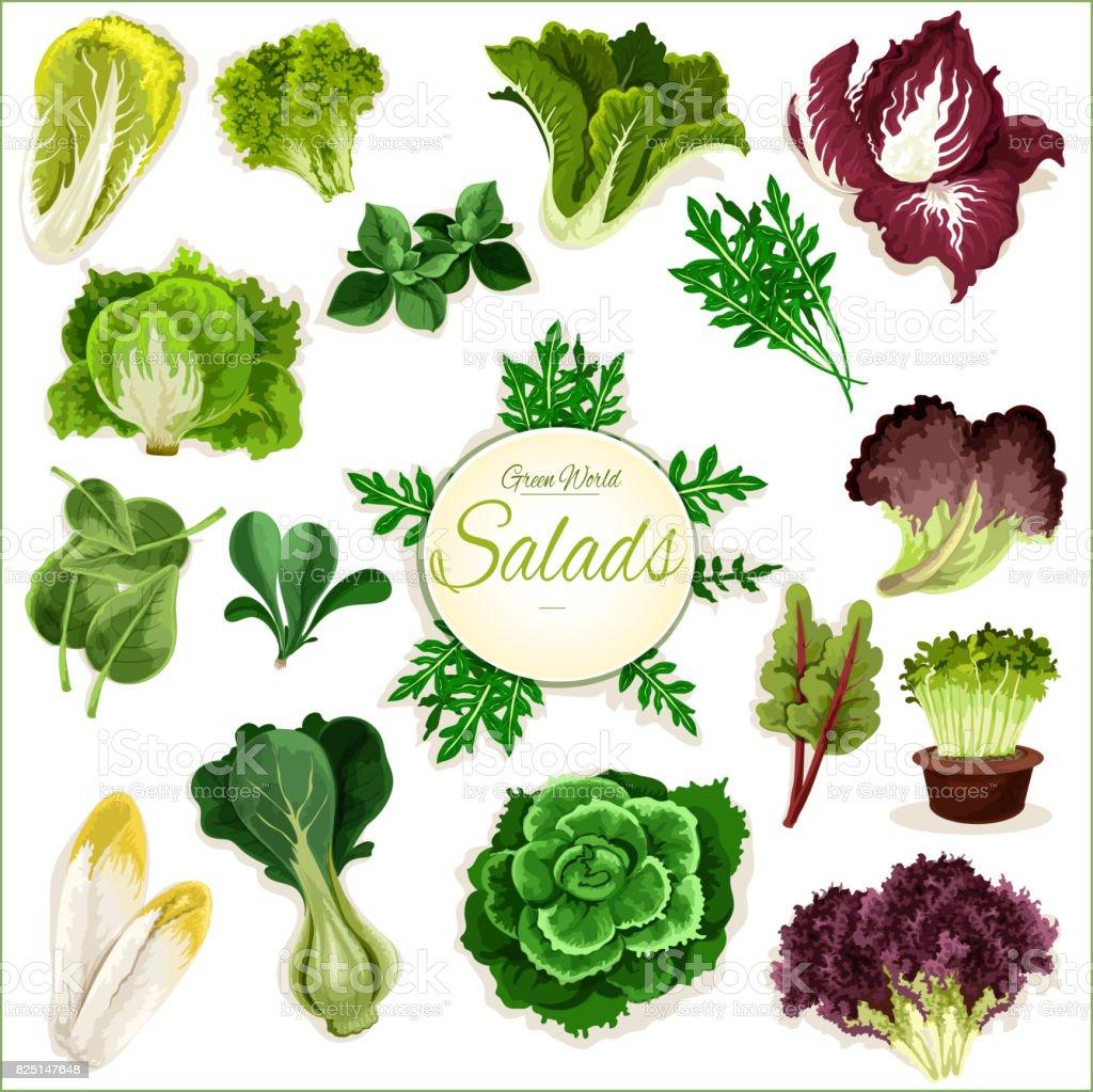 Saladas verdes, vegetais folhosos vector cartaz - ilustração de arte em vetor