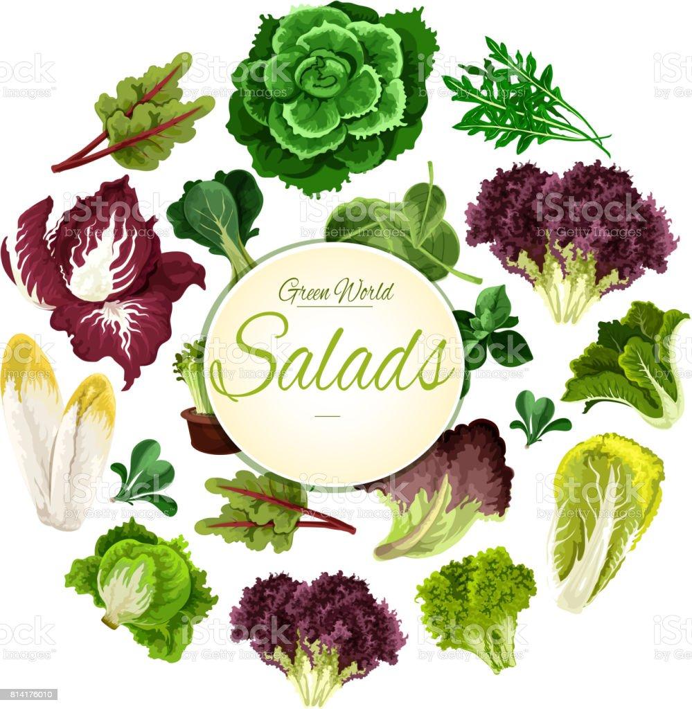 Cartaz de saladas de vegetais de folhas verdes de vetor - ilustração de arte em vetor