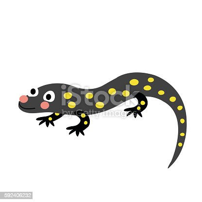 Salamander animal cartoon character. Isolated on white background. Vector illustration.