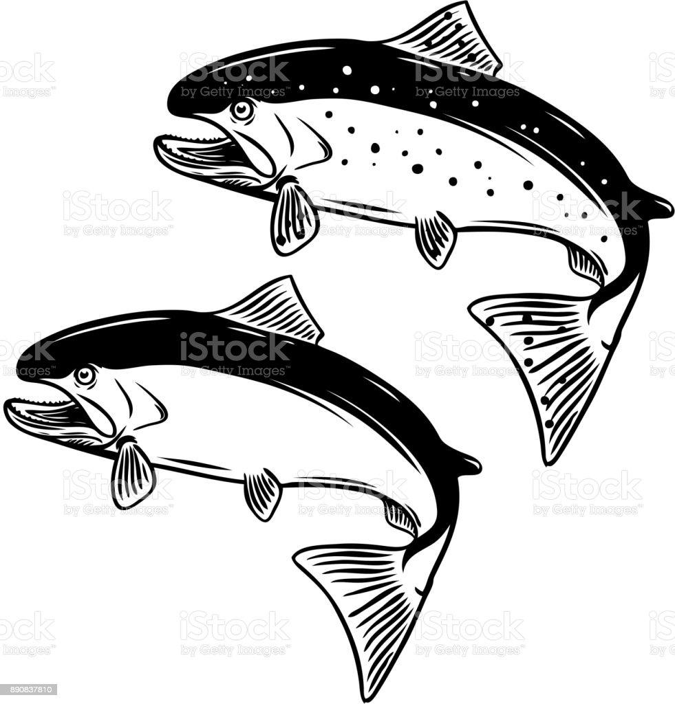 Salmon fish illustration on white background. vector art illustration
