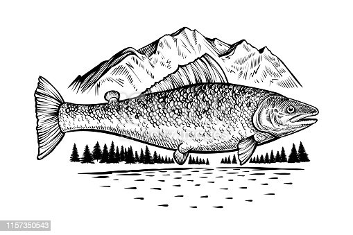 Salmon fish in wild nature. Fishing or camping theme vintage vector illustration with mountain, river and forest. Good for emblem, label or symbol. Vector engraving style drawing.