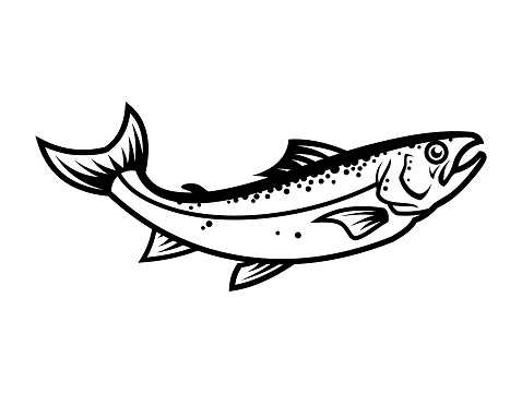 Salmon fish silhouette - cut out vector icon