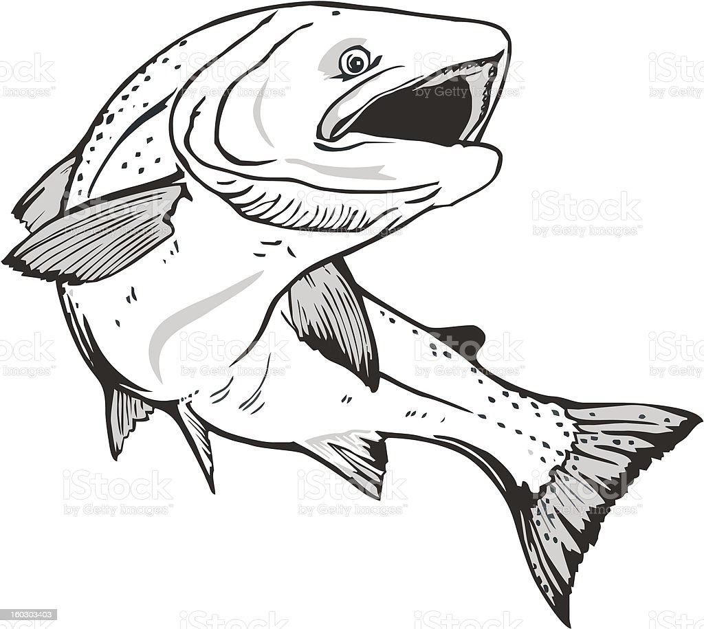 Salmon fish royalty-free stock vector art