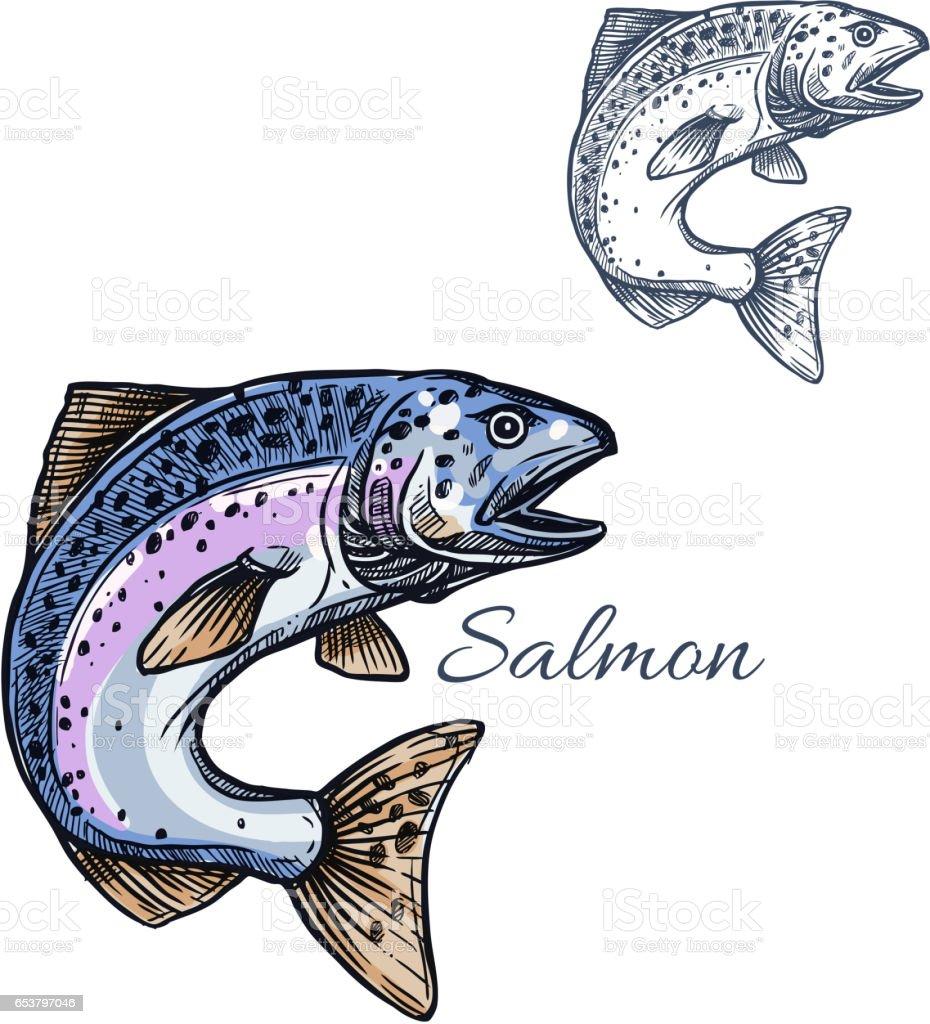 Salmon fish vector isolated sketch icon vector art illustration