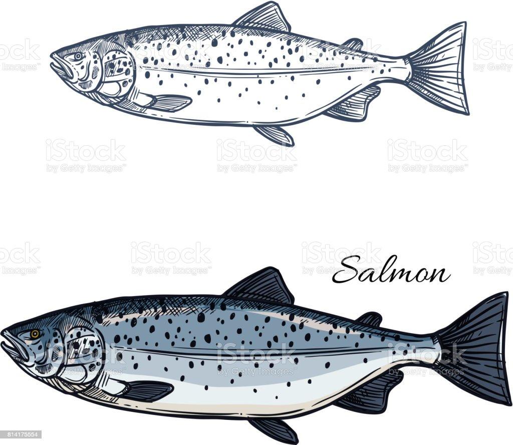 Ilustración de Icono De Salmón Pescado Vector Aislado Dibujo y más ...